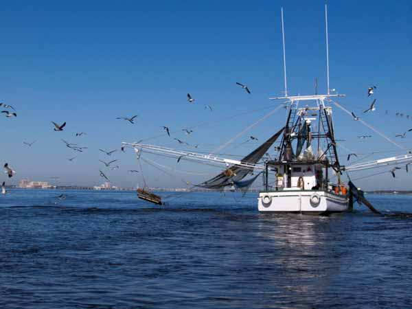 Gulf Coast Shrimp Boat - Tips for Making Environmentally-Responsible Seafood Choices