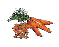 Carrots Color Illustration