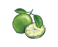 Green Lemon Color Illustration