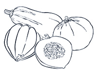 Winter Squash Black-and-White Illustration