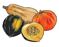 Winter Squash Color Illustration