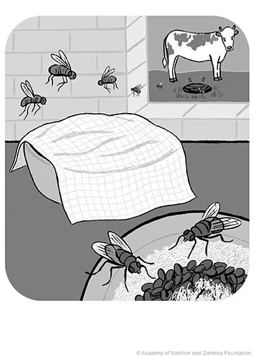 Illustration: flies black and white
