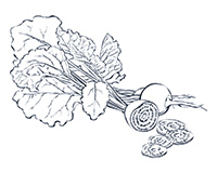 Beets Black-and-White Illustration