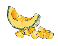 Cantalope Color Illustration