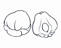 Chayote Black-and-White Illustration