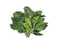 Greens Color Illustration