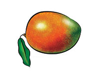 Mango Color Illustration