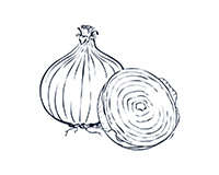 Onion Black-and-White Illustration