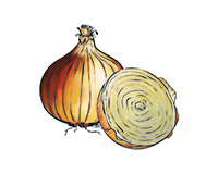 Onion Color Illustration