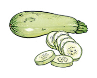 Summer Squash Color Illustration