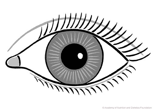 Eye Illustration: