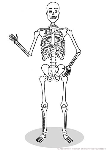 Skeleton Illustration: human skeleton