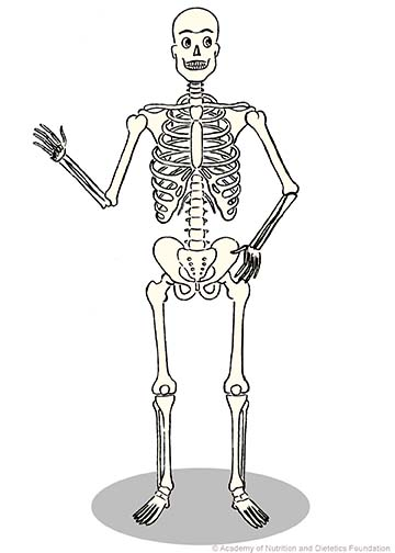 Skeleton Illustration:
